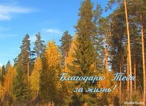 Библия и природа (2011)DVDRip